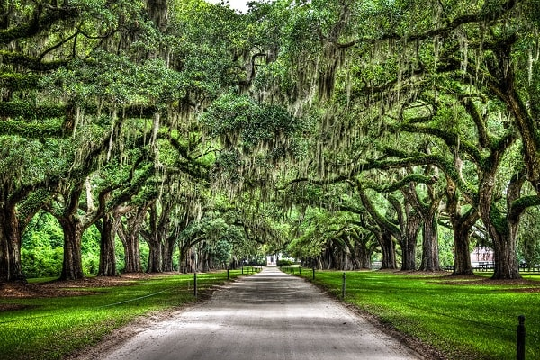 Attractions and Places to Visit in South Carolina